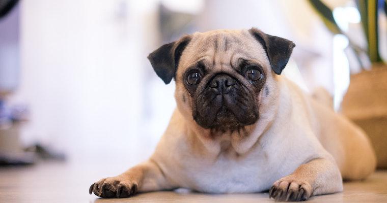 犬が涙を流す原因と考えられる病気を獣医師が解説