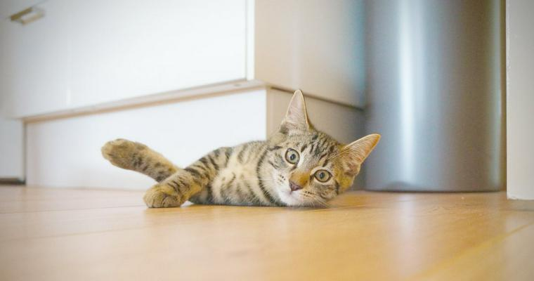 ペットホテルは猫も預けられる? メリット・デメリットや全国のホテルを紹介