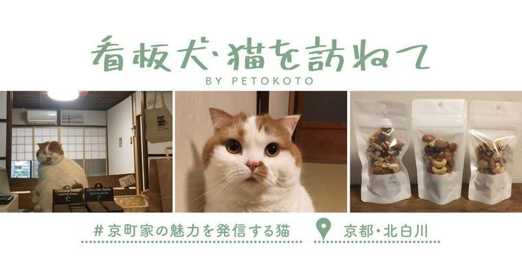 【看板犬・猫を訪ねてVol.2】京町家の魅力を発信する猫