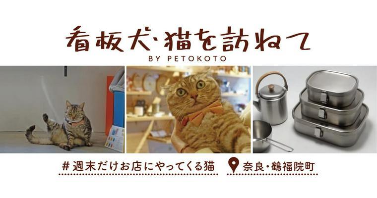 【看板犬・猫を訪ねてVol.3】週末だけお店にやってくる猫
