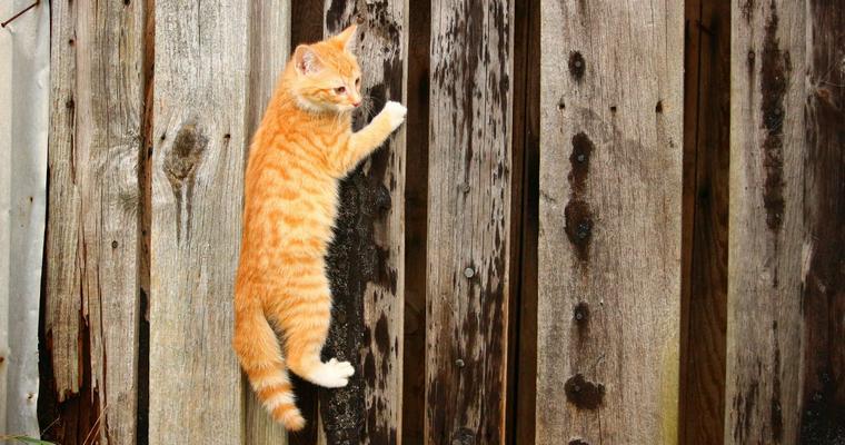 猫が教えるボルダリングジムが沖縄に!? 話題の猫店長ララを動画で紹介