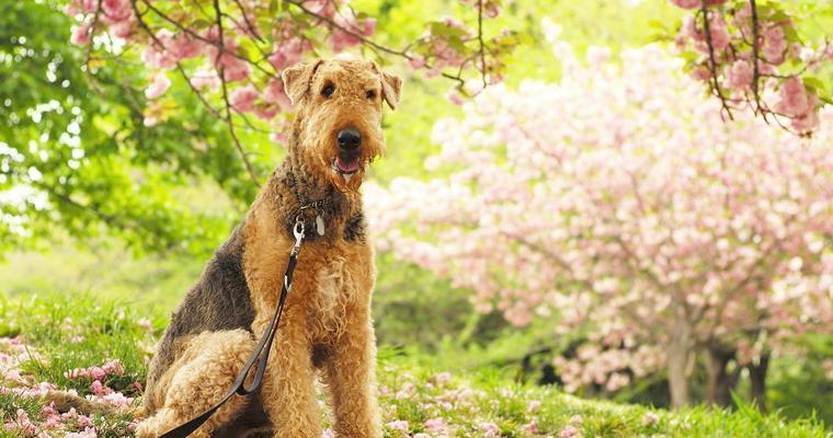 愛犬と桜を楽しもう♪ 関東&関西のお花見スポットや誤飲の注意点を紹介