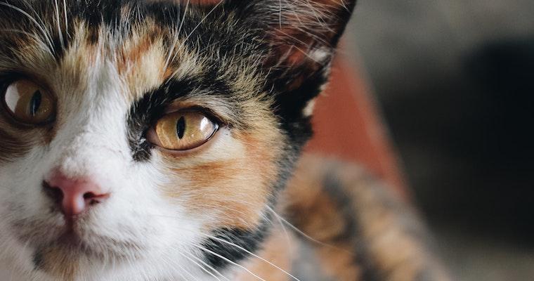 猫が下痢をした場合に考えられる原因や対処法などを獣医師が解説