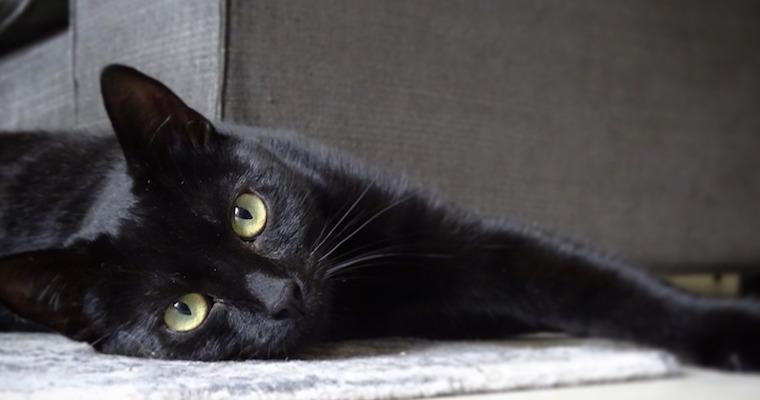 猫の耳が臭い! 耳垢の色や状態による原因、対処法などを獣医師が解説