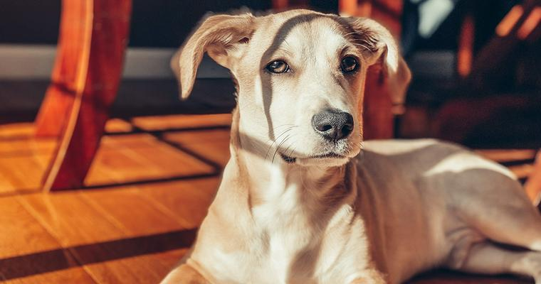 編集部おすすめ新潟のペットホテル 犬や猫のほか、うさぎや小動物が利用できる施設も