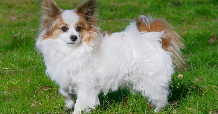 犬のつむじは91%が同じ向き!? 性格や利き足との関係を海外研究から紹介