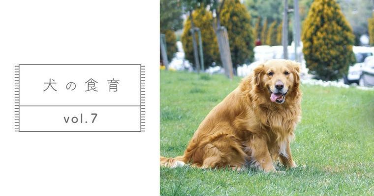 【獣医師監修】ドッグフードを変えたらうんちの色が変わったけど大丈夫?【犬の食育 Vol.7】