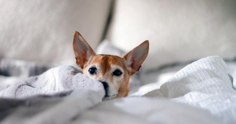 犬が痩せる場合の原因とは? 考えられる病気や対策を獣医師が解説