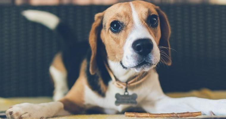 愛犬がお尻を高く上げて示す「プレイバウ」の意味とは? 対応の仕方も解説
