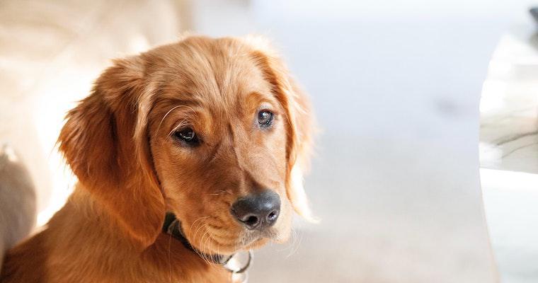 犬のかさぶたの原因とは? 皮膚炎で考えられる病気を獣医師が解説
