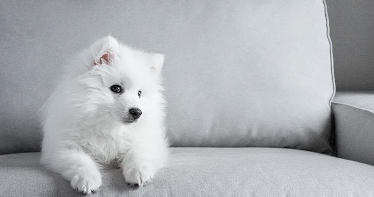 犬が便秘のときは病院に行ったほうがいい? 原因や対処法を獣医師が解説
