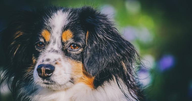 犬が吐血した場合に考えられる原因や病気、対処法などを獣医師が解説