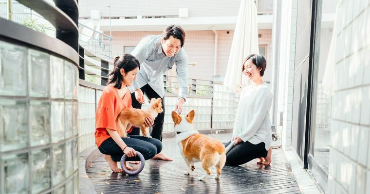 【最新犬種ランキング2020】フレブル人気は日本だけでなくアメリカでも!? 小型、中型、大型犬別に紹介
