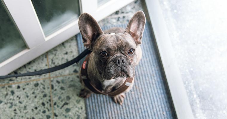 愛犬と行けるおすすめアウトレットモール全国版【ペット同伴OK】