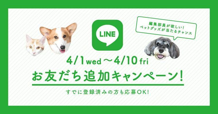 【LINEお友だち追加キャンペーン】ペトこと編集部員が欲しい! ペットグッズが当たるチャンス