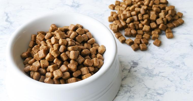 犬にキャットフードを与えるのはNG! その理由や必要な栄養の違いなどを紹介