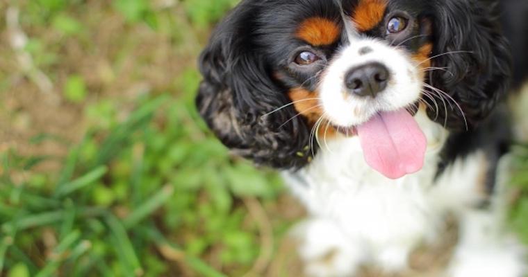 犬のフィラリア症とは?  症状や投薬頻度、時期、予防法など【獣医師が解説】