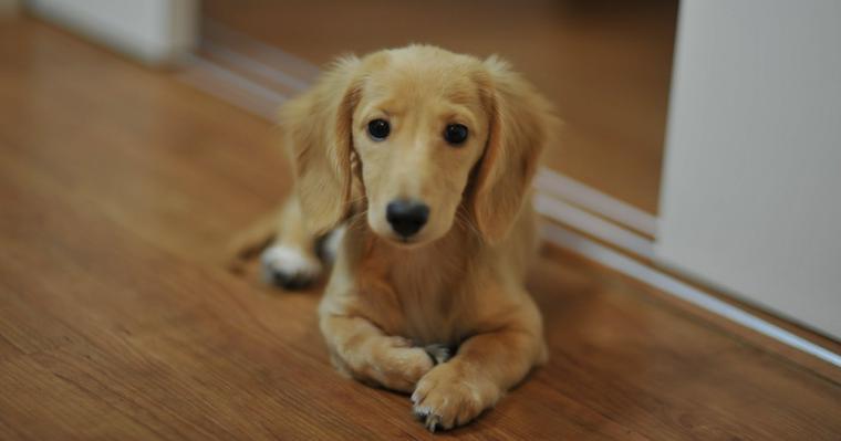 犬に「伏せ」を教える方法は? コマンドやできないときのコツをトレーナーが解説