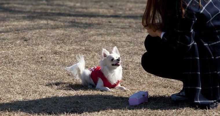犬のアイコンタクトはしつけの基本! 意味や教え方などドッグトレーナーが解説