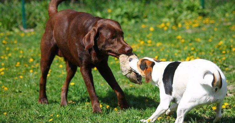 犬が唸る理由とは? しつけや対処方法についてトレーナーが解説