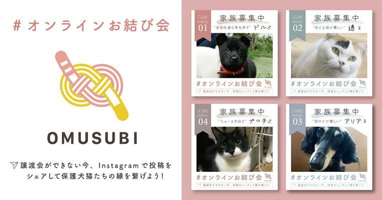 譲渡会が開催できない保護犬猫の架け橋に「#オンラインお結び会」スタート
