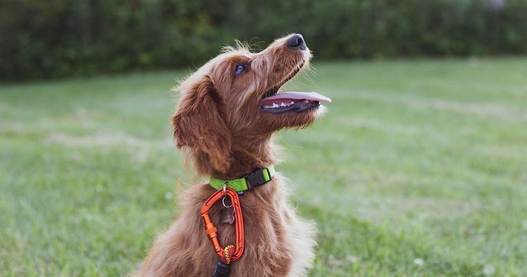 犬のクリッカートレーニングとは? クリッカーの使い方やしつけ方法について紹介