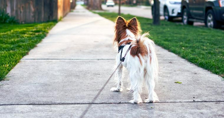 犬がマーキングをする理由とは? やめさせるためのしつけや対処法について解説