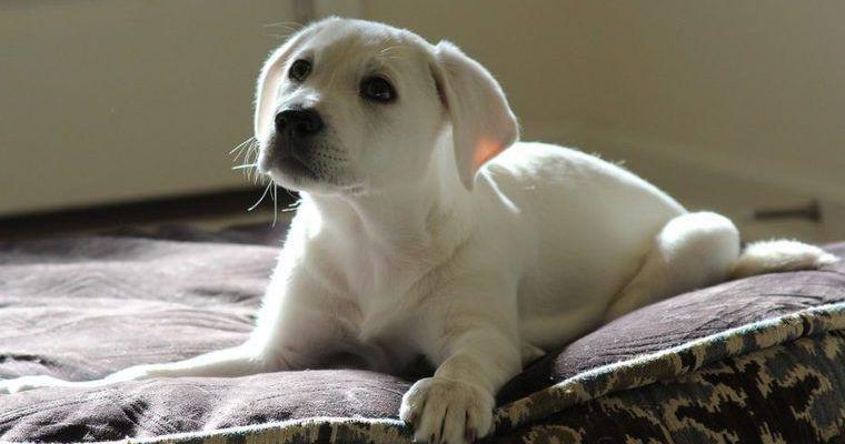 犬の夜鳴きの原因とは? 年齢別のしつけ方法や対策について解説