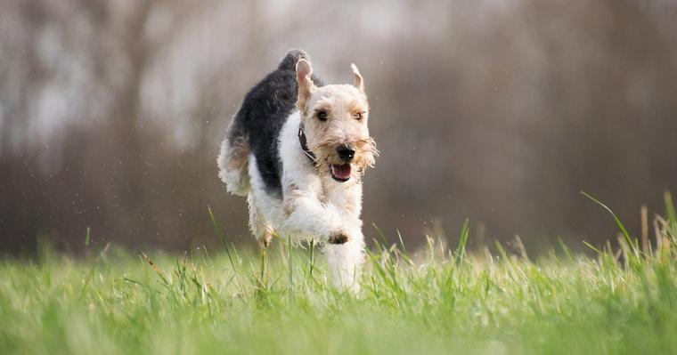 犬が興奮する原因とは? 興奮させない対処法やしつけ方