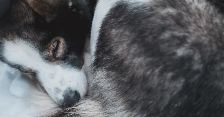 犬のフケが出る場合に考えられる原因・病気とは? 皮膚科認定医が解説