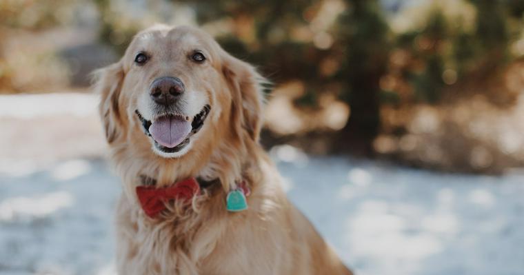 犬の正しい褒め方とは? ご褒美を使って楽しくしつける方法をトレーナーが伝授