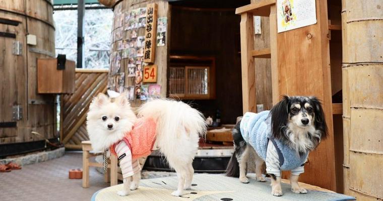 大阪の室内ドッグランおすすめ10選 特徴別やエリア別に紹介