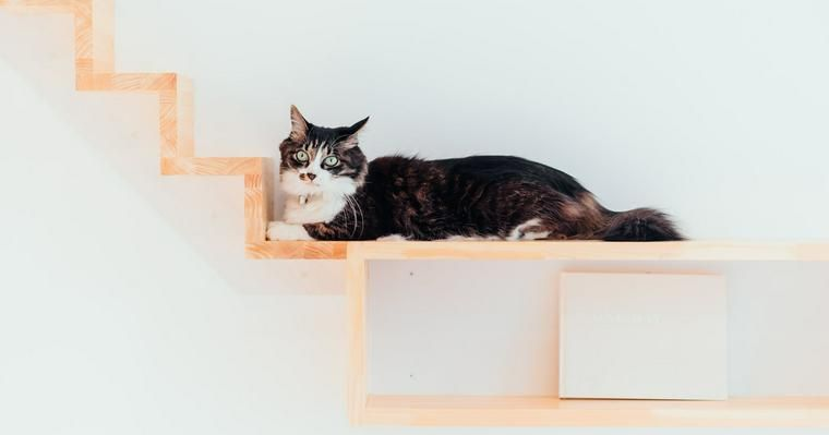 猫がいるオフィスの魅力とは 事例やメリット・デメリットを紹介