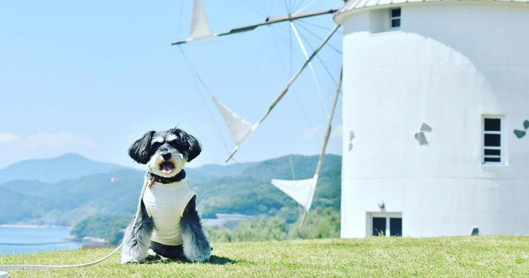 犬とお出かけ四国編|編集部厳選おすすめスポット14選