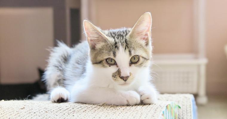 猫のしつけ方は? トイレの失敗や爪とぎなどの理由と対策について解説