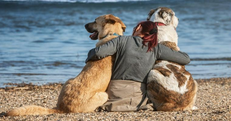 愛犬と主従関係を築くのは間違い? 犬との関係性についての考え方やしつけ方法について解説
