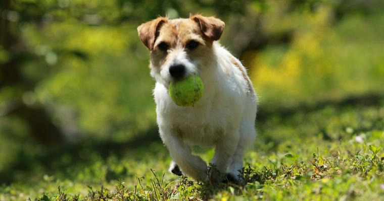 犬がボール遊びをしないのはなぜ? 好きな理由、興味がない理由や遊び方を紹介