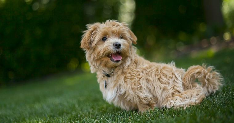 犬のボディーランゲージとは? 行動から読み取る犬の気持ちについて解説
