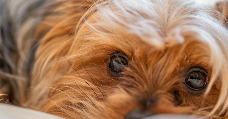 犬の視覚はモノクロ? 好きな色や視力など、犬が見ている世界を解説