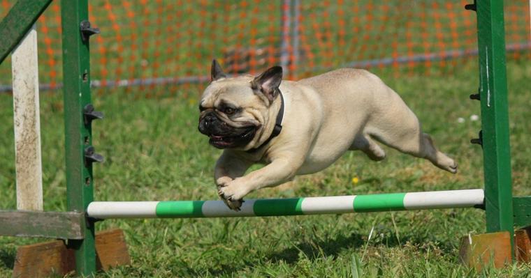 イタリア発の画期的なトレーニング! 犬に自分の真似をさせる「Do as I Do」とは