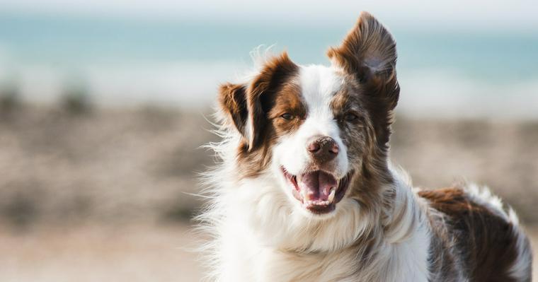 犬に噛まれたときの対処法とは? 飼い主の責任や実例などを紹介