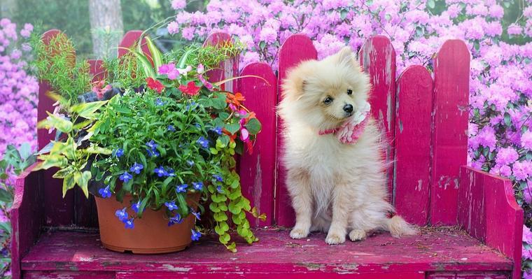 初めて犬を迎える方の犬の飼い方ガイド 迎え方から費用、グッズなどを紹介
