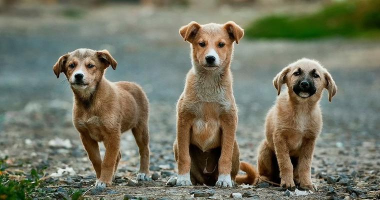 犬がマウンティングする理由とは? やめさせるための対処法をトレーナーが解説