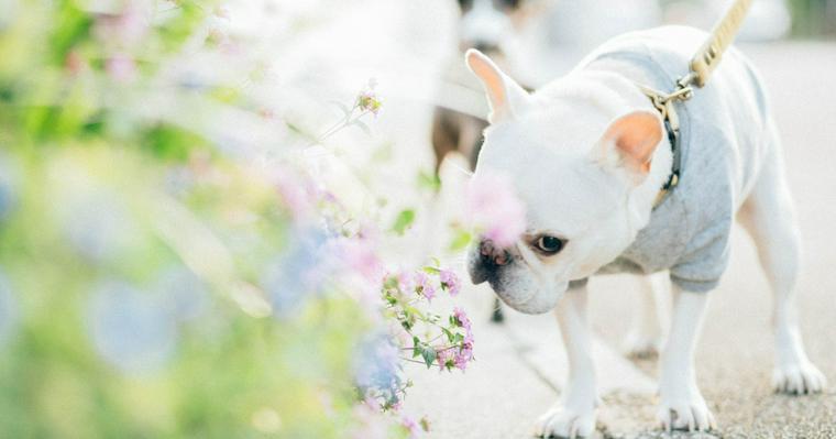 愛犬の健康は腸から作れる!? 腸内環境を整えるヒケツを紹介します。