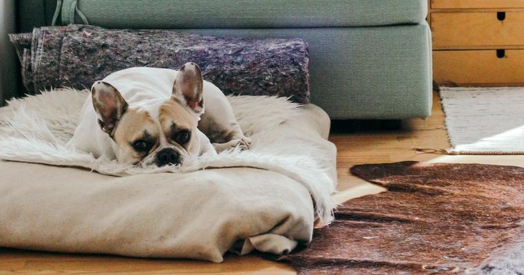 犬だってお留守番は寂しい。お留守番の時間やしつけ方をトレーナーが解説