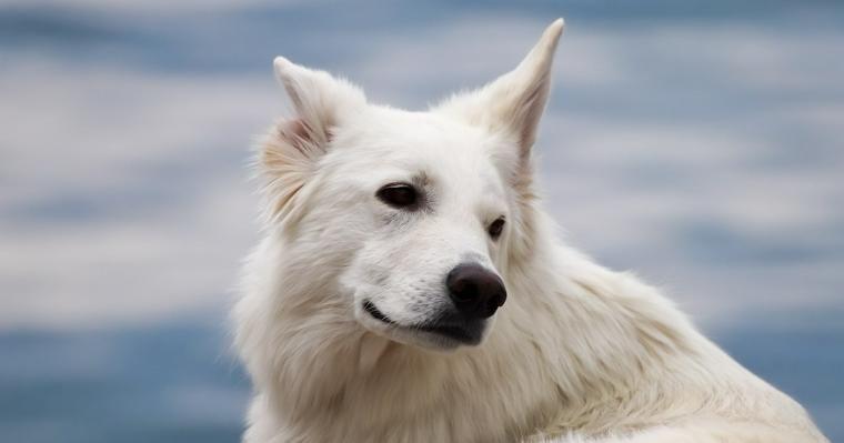 犬が嫌いな音とは? パニックになってしまった場合の対処法や克服法について解説