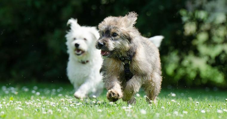 犬の社会化とは? 失敗しないトレーニングの方法や考え方を解説