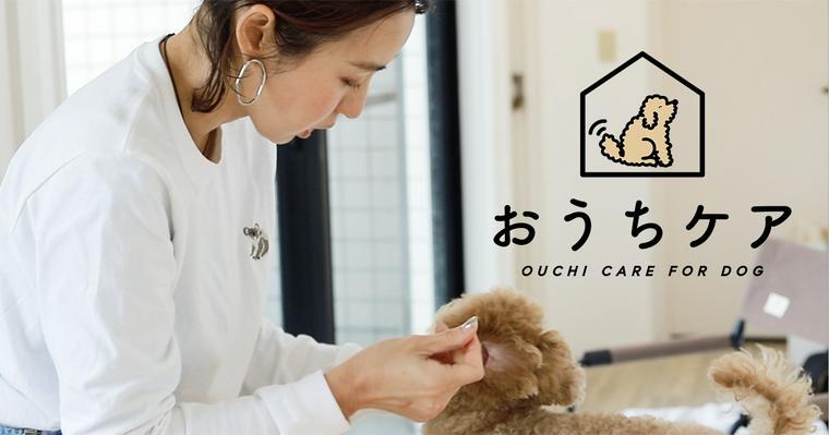 おうちでできる犬の耳掃除。頻度や洗浄液の種類、嫌がる場合のやり方を解説