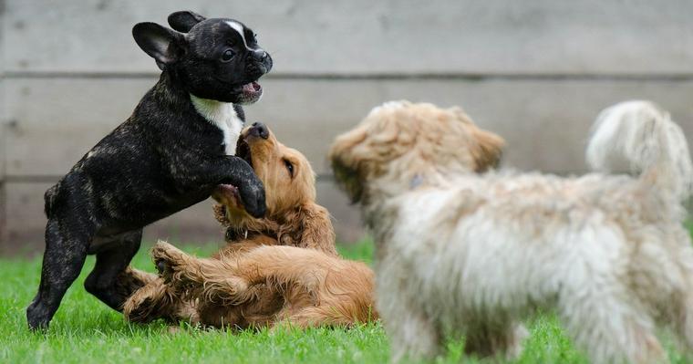 犬のしつけ教室とは? 種類や効果について解説