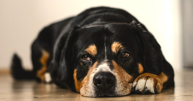 犬の反抗期はいつからはじまる? 見られる行動とその対処法をトレーナーが解説